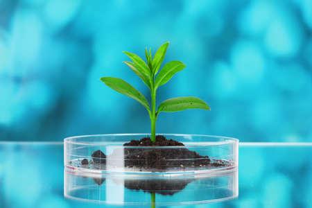 tubo de ensayo con plantas sobre fondo azul