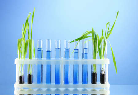 test tubes with plants on blue background photo