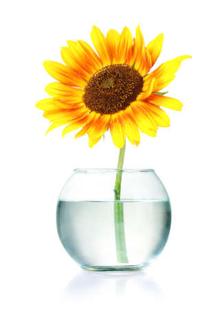 beautiful sunflowers in vase isolated on white Stock Photo - 10091043