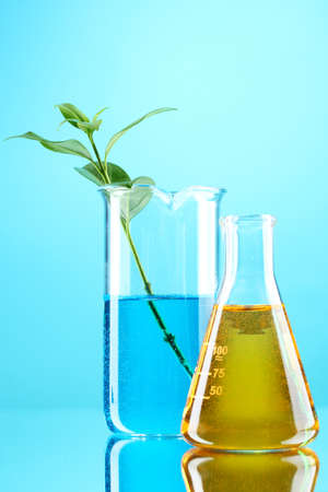 test tube with plants on blue background photo