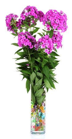 bouquet of phlox in vase isolated on white Stock Photo - 10202362