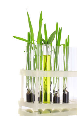 plant in a test tube isolated on white photo