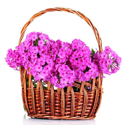 bouquet of phlox in basket isolated on white Stock Photo - 10295514