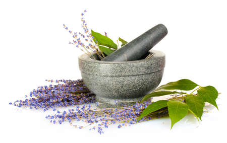 thyme: Prachtige lavendel in een mortier geïsoleerd op wit