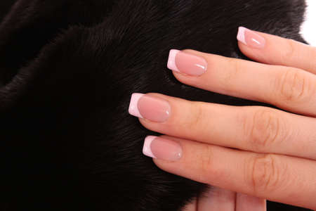 Woman hands with beautiful nails  on  mink fur background photo