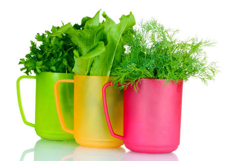 sorrel: fresh parsley, sorrel and dill in cups isolated on white Stock Photo