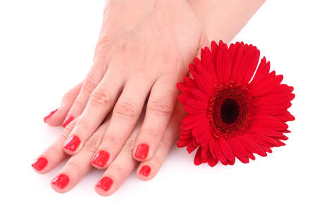 beautiful red manicure and  flower on white  background photo
