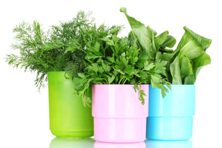fresh parsley, sorrel and dill in cups isolated on white photo