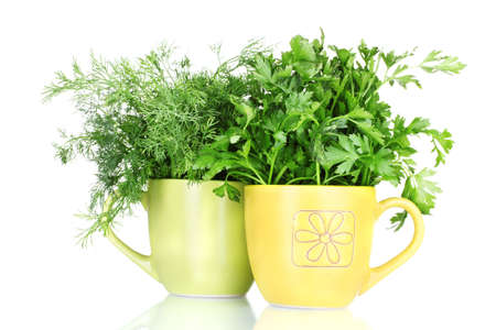 fresh parsley and dill in cups isolated on white photo