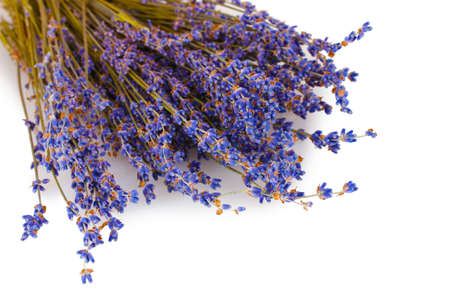 lavandula: Beautiful lavender isolated on white