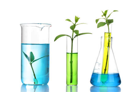 chemical engineering: plants in a test tube isolated on white