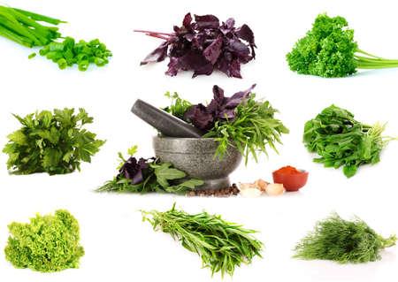 cebollas: collage de verdes culinarias. aislado en blanco