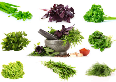 green leafy vegetables: collage of culinary greens. isolated on white