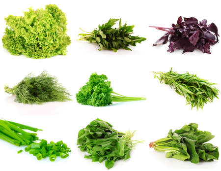 leafy: collage of culinary greens. isolated on white