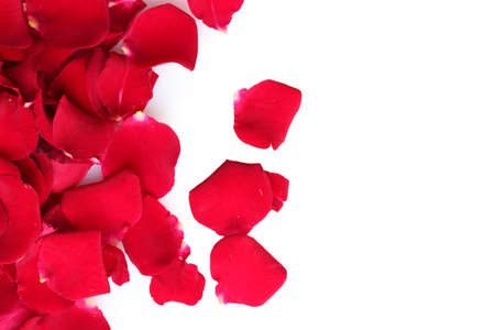 beautiful petals of red roses isolated on white photo