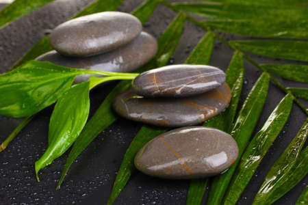 spa stones with water drops on palm leaf on black background Stock Photo - 11123058