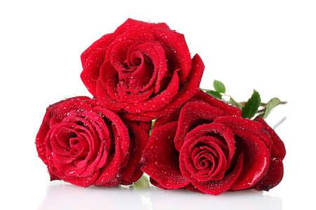 rosas rojas: hermoso ramo de rosas rojas aislados en blanco