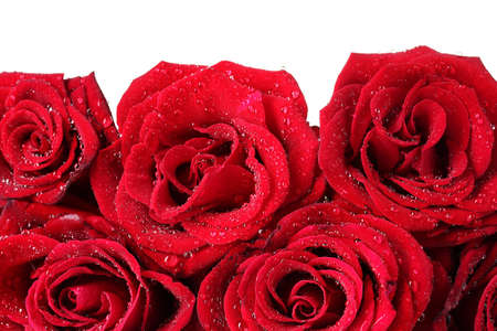compliment: Beautiful red roses closeup Stock Photo