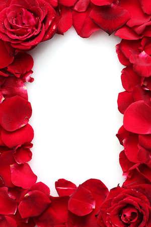 흰색에 격리하는 빨간 장미와 장미의 아름다운 꽃잎