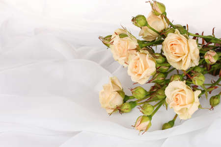 Small roses in a white cloth isolated on white Stock Photo - 11337805
