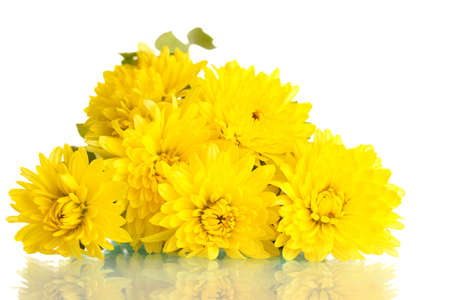 Yellow Chrysanthemums flowers isolated on white photo