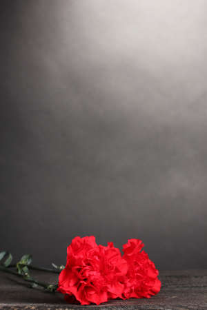 Two carnation on grey photo