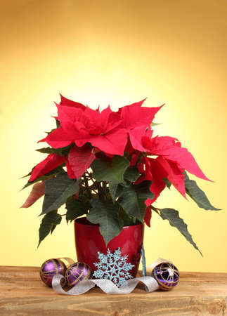 Beautiful poinsettia with christmas balls on wooden table on yellow background photo