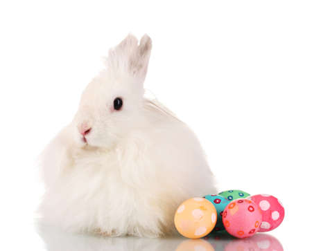 Fluffy white rabbit with eggs isolated on white