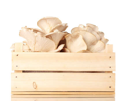oyster mushrooms in wooden box isolated on white Stock Photo - 11795157
