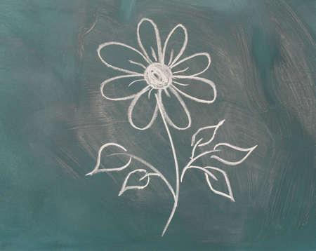 flowerhead: Blackboard with drawing flower closeup
