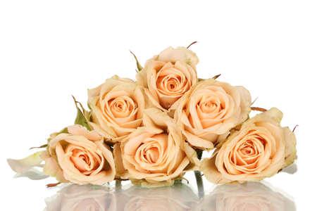 Many roses on white background photo