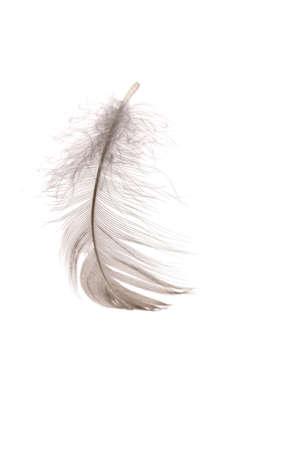 piuma bianca: Singola piuma lanuginoso isolato su bianco Archivio Fotografico