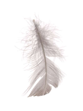 waft: Single fluffy feather isolated on white Stock Photo