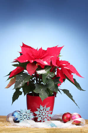 Beautiful poinsettia with christmas balls on wooden table on blue background photo