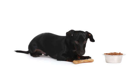 black little dachshund dog isolated on white Stock Photo - 12015357