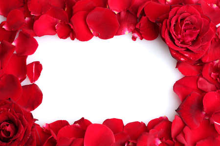 roses background: beautiful petals of red roses and roses isolated on white