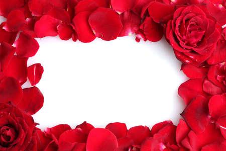 red roses: hermosos pétalos de rosas rojas y rosas aisladas en blanco Foto de archivo