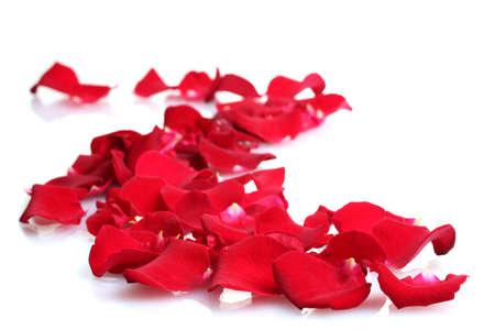 rose petals: beautiful petals of red roses isolated on white