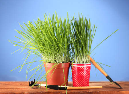 Green grass in two flowerpot on blue background photo