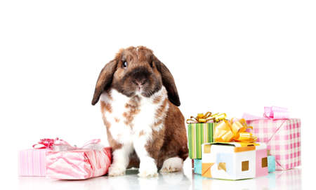 Lop-eared rabbit with gift boxes isolated on white Stock Photo - 12110624