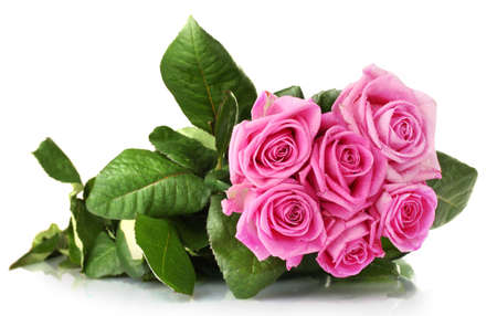 Many pink roses isolated on white Stock Photo