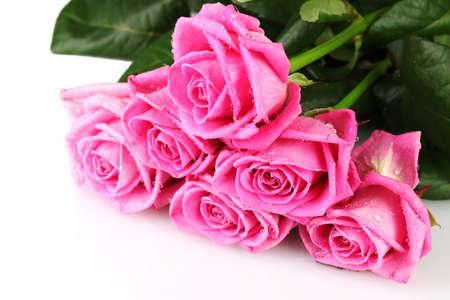 Many pink roses isolated on white Stock Photo