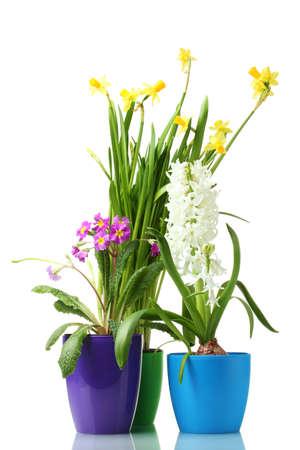hermosas flores de primavera en tiestos aislados en blanco Foto de archivo - 12436056