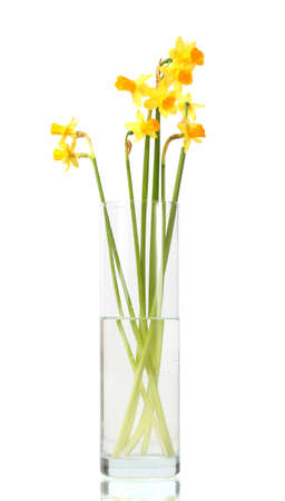 floral arrangement: beautiful yellow daffodils in transparent vase isolated on white Stock Photo