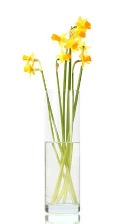 arreglo floral: hermosos narcisos amarillos en un florero transparente aislado en blanco