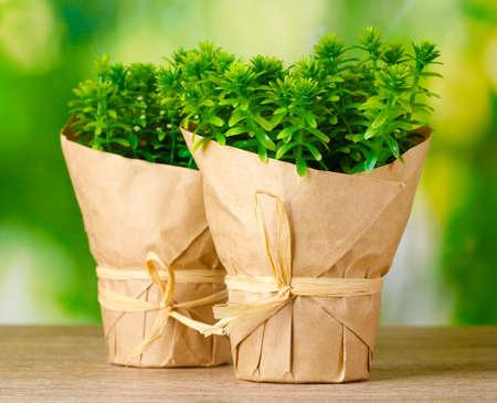 Plantas de tomillo hierbas en macetas, con una decoración de papel en la hermosa mesa de madera sobre fondo verde Foto de archivo - 12562521