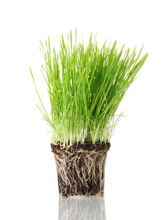 Green grass with the land isolated on white Stock Photo - 12717911