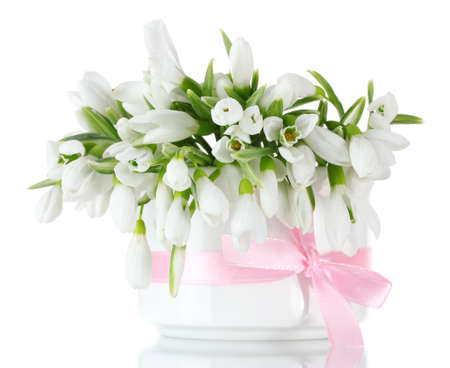 snowdrop: beautiful bouquet of snowdrops in vase with bow isolated on white