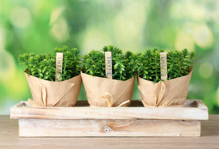 thyme herb plants in pots with beautiful paper decor on  wooden stand on green background Stock Photo - 12716228