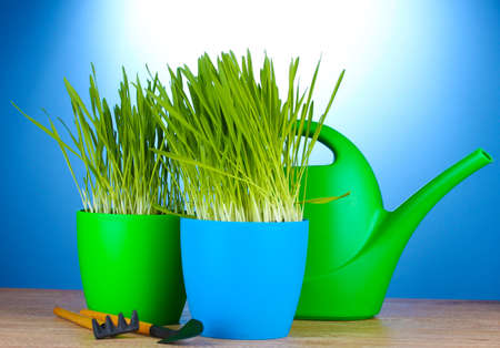 beautiful grass in a flowerpots, watering can and garden tools on wooden table on blue background photo